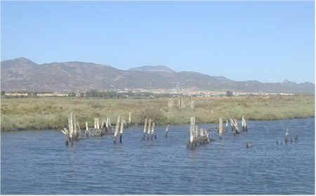 Capoterra punto net lo stagno di santa gilla rinasce for Ecosistema dello stagno