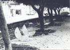 gcorda (6)