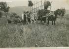 sm_11_mietitura_1930-1940